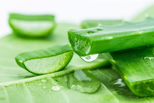 Chiết xuất nha đam trong kem dưỡng ẩm giúp giữ ẩm hiệu quả