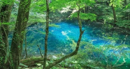 Vùng núi Shirakami - nơi có hơn 12.000 loài thảo dược quý giá đối với sức khỏe và sắc đẹp con người.
