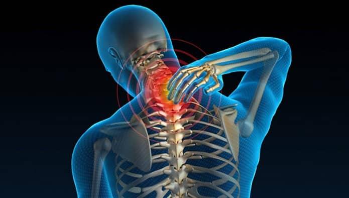 Rong nho hỗ trợ xương khớp chắc khỏe